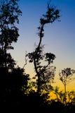 wieczorem drzewa zdjęcie stock