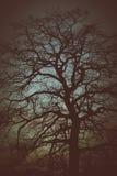 wieczorem jednego drzewa Fotografia Stock