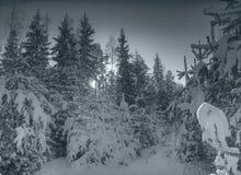 wieczorem lekką zimę Fotografia Stock