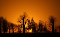 wieczorem parku sunset spokojne obraz royalty free