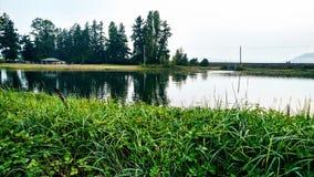 Wieder hergestellter natürlicher Sumpflebensraum stockfoto