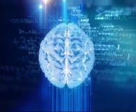 Wiedergabe 3d des menschlichen Gehirns auf Technologiehintergrund Lizenzfreie Stockfotografie