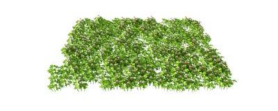 Wiedergabe 3d eines Grasfleckens auf Weiß für Architektur Stockfoto