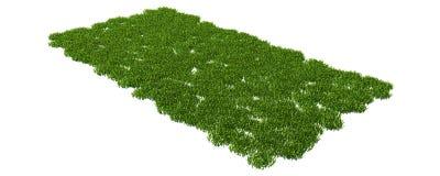 Wiedergabe 3d eines Grasfleckens auf Weiß für Architektur Lizenzfreies Stockbild
