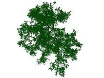 Wiedergabe 3d eines umrissenen schwarzen Baums mit den grünen Rändern lokalisiert Stockfoto