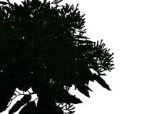 Wiedergabe 3d eines umrissenen schwarzen Baums mit den grünen Rändern lokalisiert Lizenzfreie Stockfotografie