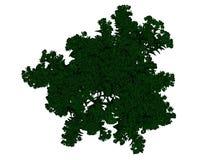 Wiedergabe 3d eines umrissenen schwarzen Baums mit den grünen Rändern lokalisiert Lizenzfreies Stockfoto