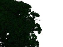 Wiedergabe 3d eines umrissenen schwarzen Baums mit den grünen Rändern lokalisiert Stockbilder