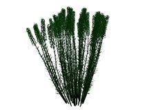 Wiedergabe 3d eines umrissenen schwarzen Busches mit den grünen Rändern lokalisiert Stockfotografie