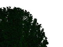 Wiedergabe 3d eines umrissenen schwarzen Busches mit den grünen Rändern lokalisiert Lizenzfreies Stockfoto