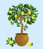 Wiedergabe des botanischen Buches der Weinlese Lizenzfreies Stockfoto