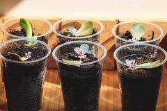 Wiedergabe von Succulents durch Blätter Lizenzfreies Stockbild