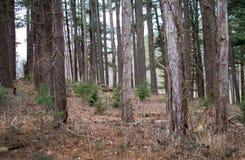 Wiedergeburt von neuen Bäumen im Wald lizenzfreie stockfotos
