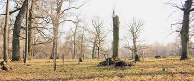 Wiederherstellung der Natur nach Winter Lizenzfreie Stockfotografie