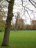 Wiederholung von Bäumen lizenzfreie stockfotografie