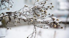 Wiedt door zijn manier van sneeuw stock videobeelden