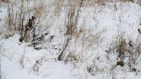 Wiedt zijn manier door de sneeuw stock videobeelden