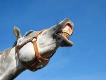 Wieherndes Pferd Stockbilder