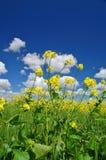 wiejska łąkowa wiosny Zdjęcia Royalty Free