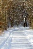Wiejska śnieżna wiejska droga przez zima lasu Zdjęcie Royalty Free