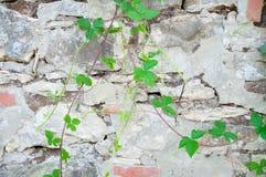 Wiejska ściana Zdjęcie Royalty Free