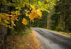 wiejska droga Zdjęcia Royalty Free