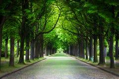 Wiejska droga bieg przez drzewnej alei Zdjęcie Stock