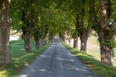wiejska droga, drzewo wykładający zdjęcie stock