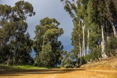 Wiejska droga gruntowa otaczał mój drzewa na markotnym dniu - Napier, Zachodni przylądek, Południowa Afryka zdjęcie stock
