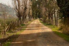 Wiejska droga herbaty pola gospodarstwo rolne z ranku słońca lekkim skutkiem Dramatyczna, wiejska i sceniczna wiodąca drogowa fot Fotografia Royalty Free