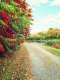 Wiejska droga i kolorowi jesieni drzewa Zdjęcie Stock