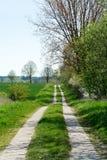 Wiejska droga między drzewami i zieleni polami Fotografia Stock