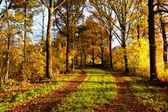 Wiejska droga między jesieni drzewami Obraz Stock
