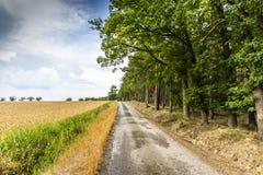 Wiejska droga między lasem i polem w czeskiej wsi Obraz Royalty Free