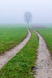 Wiejska droga na mgłowym ranku zdjęcia royalty free