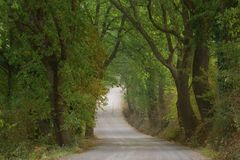 Wiejska wiejska droga otaczająca drzewami włochy Toskanii Zdjęcie Stock