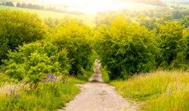 Wiejska wiejska droga po środku bujny zieleni krzaka i iluminująca słońcem Zdjęcie Royalty Free