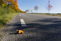 Wiejska droga w jesieni Obrazy Royalty Free