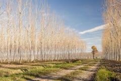 Wiejska droga w jesieni Zdjęcie Royalty Free