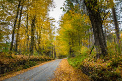 Wiejska droga w jesieni Zdjęcia Royalty Free