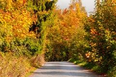 Wiejska droga w jesieni z żółtymi drzewami Zdjęcia Stock