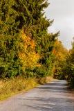Wiejska droga w jesieni z żółtymi drzewami Fotografia Stock