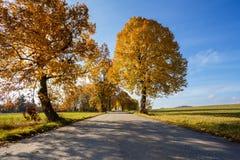 Wiejska droga w jesieni z żółtymi drzewami Zdjęcia Royalty Free