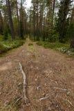 Wiejska droga w lesie Zdjęcia Royalty Free