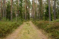 Wiejska droga w lesie Fotografia Stock