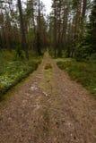 Wiejska droga w lesie Obrazy Stock