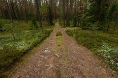 Wiejska droga w lesie Zdjęcie Stock