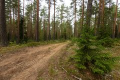 Wiejska droga w lesie Obrazy Royalty Free