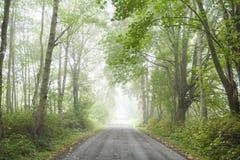 Wiejska Droga w mgle Fotografia Stock