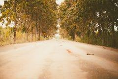 Wiejska wiejska droga wśród zielonych drzew Obraz Stock